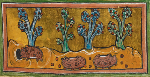 A detail from the Rochester Bestiary, showing an illustration of hedgehogs rolling on the ground to collect grapes.