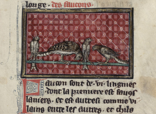 A detail from a 14th-century manuscript, showing an illustration of different types of hawks.